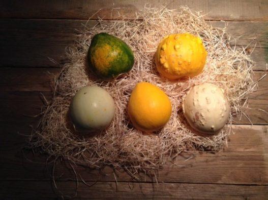Zucche Ornamentali Commestibili