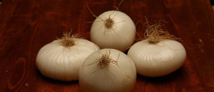 Cipolle bianche fresche