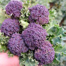 Broccolo viola