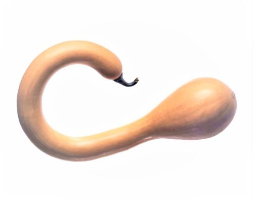 Zucca Trombetta