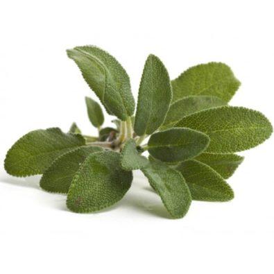 Salvia essiccata in mazzetto